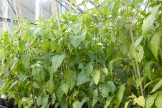 Jornadas de Sanidad Vegetal y Sostenibilidad