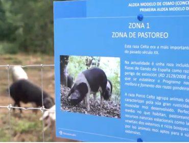 Osmo: Recuperación del rural y generación de riqueza gracias a las «aldeas modelo»