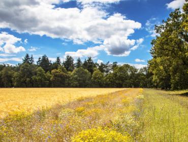 BASF se compromete a reducir las emisiones de CO2 por tonelada de cosecha en un 30%