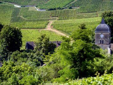 ¿Hasta que punto influye el terroir para diferenciar un vino?