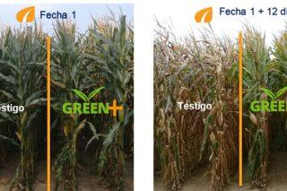 Sólo 1 de cada 3 ganaderos cosecha el maíz en su estado óptimo