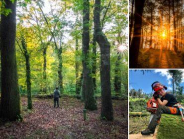 Balance de PEFC Galicia del año 2020 para el sector forestal