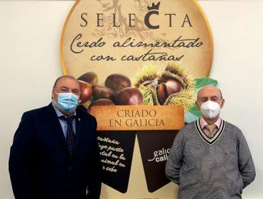 Coren compra 4,7 millones de kilos de castaña gallega para su gama de cerdo Selecta