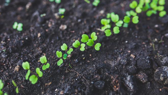 Uso de ozono en agricultura: ventajas e inconvenientes