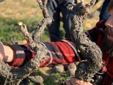 """""""Los viñedos duran cada vez menos porque se poda mal"""""""