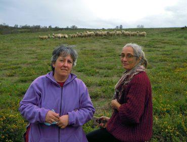 SAT Salgueiriña, una explotación mixta de cabras y ovejas para cuidar del monte comunal
