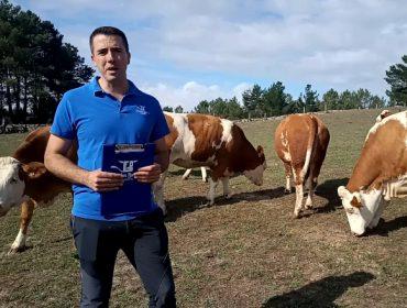 """""""La Fleckvieh es la raza que mejor puede competir con la Holstein"""""""