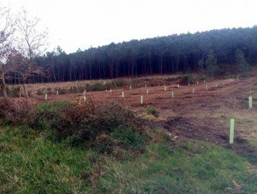 Gestión de la biodiversidad en el monte: propuestas para una ordenación razonable (II)