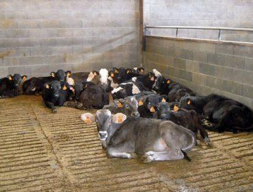 El Ministerio impulsa la creación de un centro nacional de referencia de bienestar animal