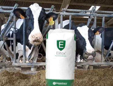 Elitox®: El producto que elimina las micotoxinas del ganado