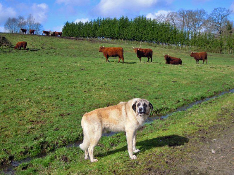 Cursos sobre ganaderías de vacuno de carne, ovino - caprino y prevención de ataques de lobo
