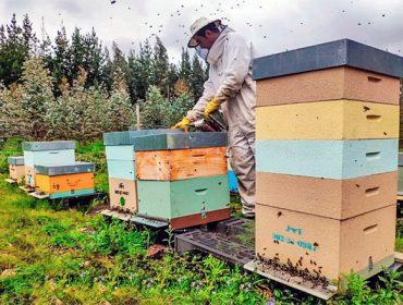 Convocadas las ayudas para producción y comercialización de miel
