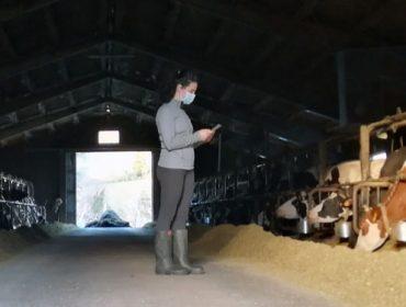 Nueva herramienta de gestión para rebaños pequeños de vacuno de leche: UNIFORM-Repro Pocket