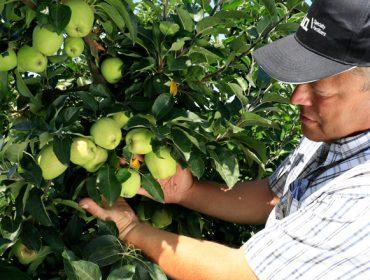 Agromaster, un fertilizante para garantizar la nutrición y crecimiento uniforme de frutales y cultivos leñosos