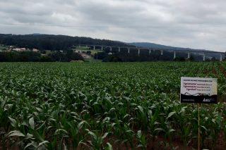 ICL demuestra en campo la eficacia de su programa de fertilización integral para maíz
