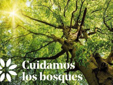 """PEFC lanza la campaña """"Cuidamos los bosques"""" para celebrar el Día Internacional de los Bosques"""
