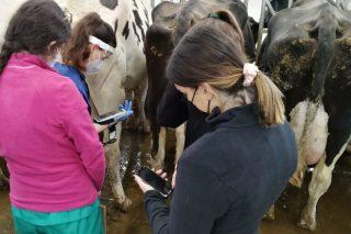 Más de 500 alumnos del Campus Terra de Lugo harán prácticas en la Granxa Experimental de Vacuno de Leche