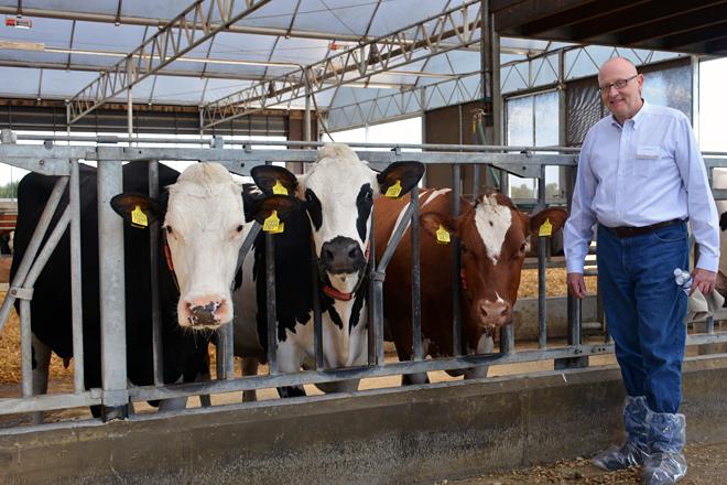 Un estudio con 3.500 vacas lecheras demuestra que los animales híbridos son más rentables en las ganaderías