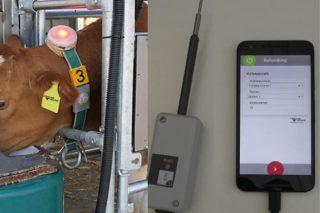 ¿Puede ser el big data un aliado para aumentar la rentabilidad de las ganaderías lecheras?