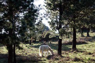 """""""En Galicia hay mucha cabida para el pino en montes donde las frondosas tendrían dificultades"""""""