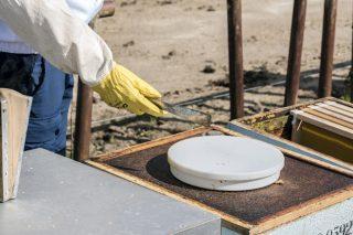 Cursos de apicultura durante el mes de julio en el CFEA de Monforte de Lemos