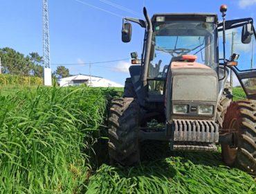 Jornada sobre pasto siambasa: Manejo del cultivo y experiencias en el norte de España