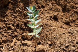 Agroblen Tablet, la nueva gama de fertilizantes encapsulados de ICL para forestal, viña y huerta