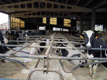El estudio de costes de producción de las granjas de leche se diluye en la indefinición