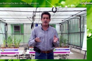 Jornada sobre enfermedades de los cereales: un cultivo sano es clave para la producción y calidad de cosecha