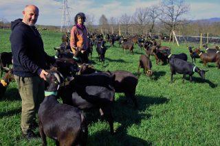 Touza Vella, pioneros del queso de cabra en Galicia