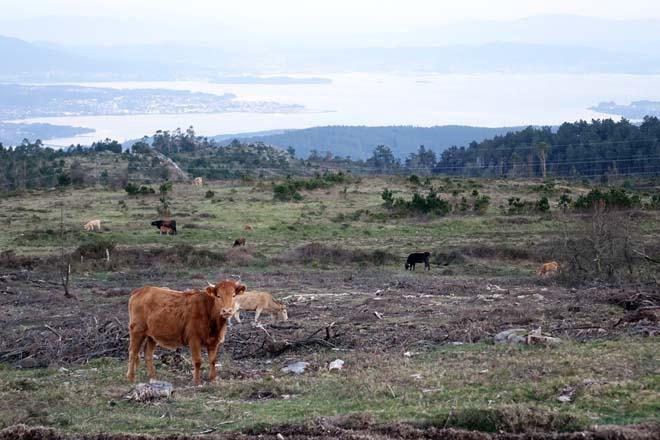 Conocer la gestión comunal del pasado para el rural futuro