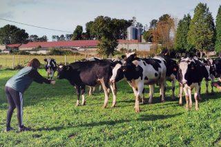 Las vacas que liderarán el cambio