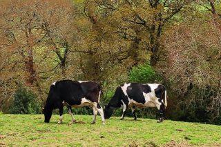 Cursos sobre pastoreo y alimentación del ganado
