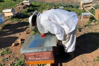 Nuevas alternativas para combatir la varroa en el colmenar