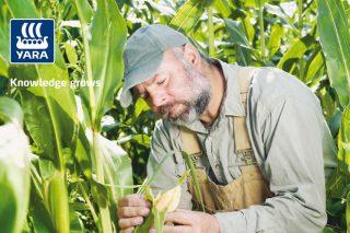 Yara Mila Actyva:  El abonado idóneo para un buen desarrollo del maíz