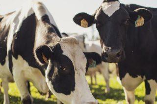 'Únicla Cero Emisiones', primera leche que compensa la huella de carbono asociada a su proceso productivo