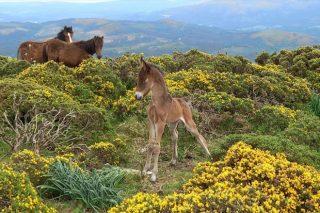 Actividad de sensibilización sobre los caballos en Sabucedo