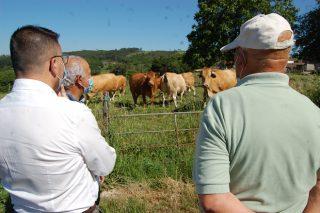 La Xunta quiere seleccionar vacas rubia galega con una mayor aptitud lechera