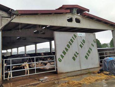 Ganadería de leche de Ordes ofrece puesto de trabajo estable