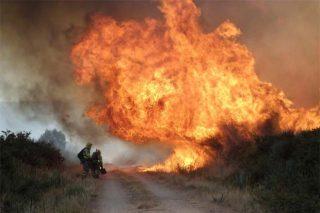El 87% de la superficie forestal quemada es monte raso, sin arbolado