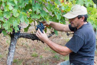 Los vinos de la ribera del Navia avanzan un paso más en su reconocimiento oficial