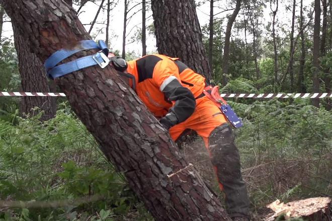 Árboles sentados: recomendaciones para evitar riesgos de accidente durante su tala