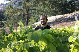 Las viñas centenarias del Morrazo que resistieron la plaga de la filoxera