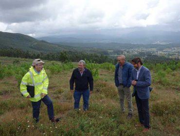 Árboles por carbono en los montes gallegos