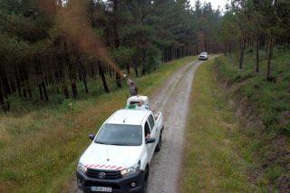 La Fundación Arume inicia el tratamiento de pinares de la provincia de Lugo afectados por las enfermedades de las bandas