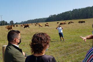 Las «Vaquiñas de Pinzás», un proyecto pionero y ejemplar de generación de riqueza y prevención de incendios