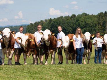 Ganadería Sitka: Así trabajan los mejores criadores de ganado Fleckvieh de Austria