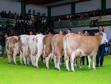 Últimas plazas para conocer las mejores ganaderías de Fleckvieh de Austria y las ventajas de esta raza