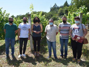 Se ofrece formación para personas que se quieran incorporar a la viticultura en las Terras do Navia