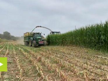 La cooperativa Aira arranca la campaña de ensilado de maíz de este año en la zona de Chantada